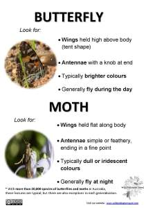 Butterfly and moth ID tips