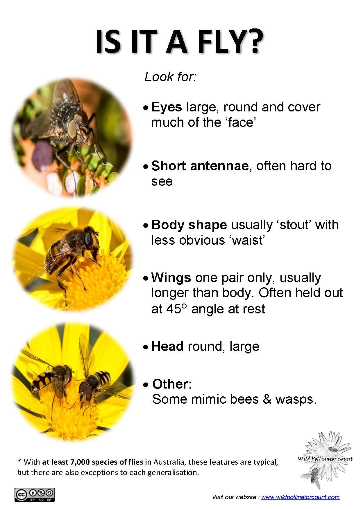 Identification Tips | Wild Pollinator Count