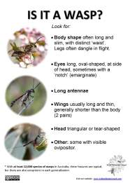 Wasp ID tips