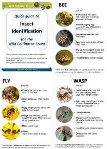 Insect ID quick guide