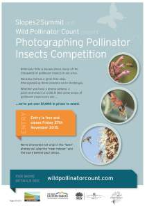 Wild pollinator photography competition flyer