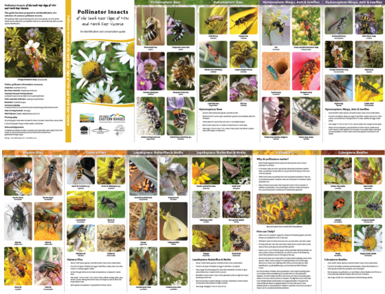 Pollinators guide in hardcopy layout