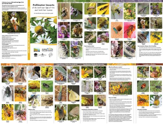 Pollinators guide in hardcopy layout