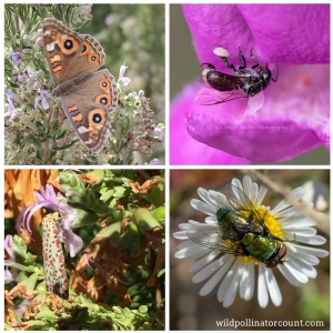 Image of butterfly, moth, native bee and fly