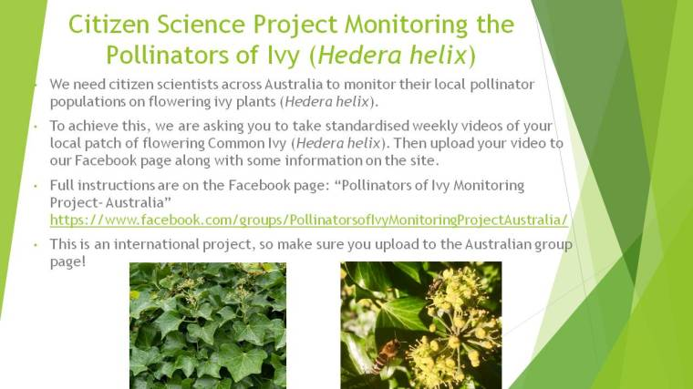 Citizen Science Project Monitoring the Pollinators of Ivy