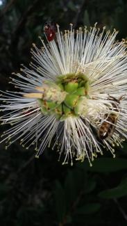 By Diana Moran ___ native bee and honey bee