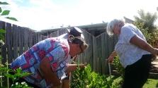 By Maryborough Garden Club ___ spotting