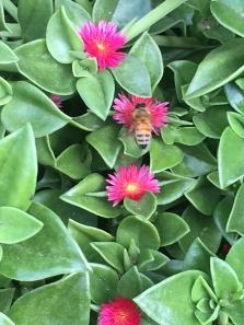 By the Hubina family ___ honey bee