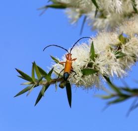 Beetle by Nush Abikhair