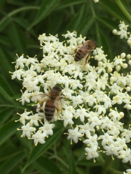 Honey bees by Michelle H