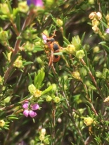 Wasp by Samantha Ward