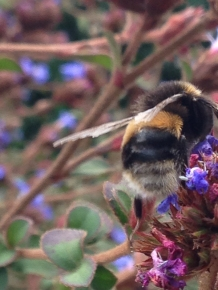 Bumble bee by Jennifer Stackhouse