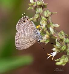 Butterfly by Erica Siegel