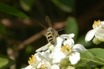 Flower wasp by Deb P