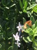 Flower wasp by Samantha Ward