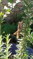 Grasshopper by Tiffany Johnson