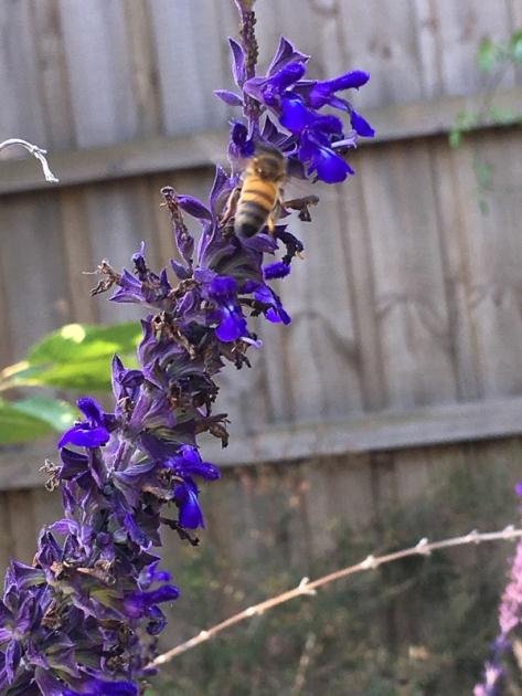 Honey bee by Abigail Murphy