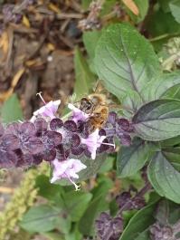 Honey bee by Megan Horn