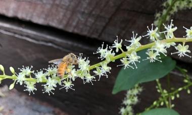 Honey bee by Sam Miller