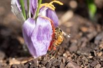 Honey bee by Viv Wilson