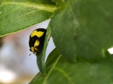 Ladybird by Jo McKeown