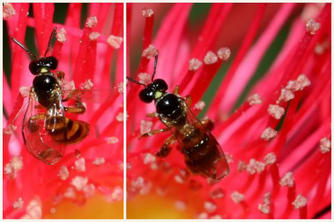 Native bees by Julie C