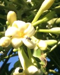 Stingless native bees by Michelle Macnamara