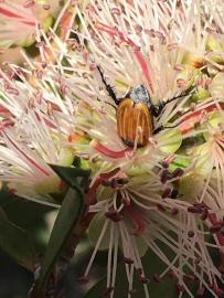 Beetle by Samantha Ward
