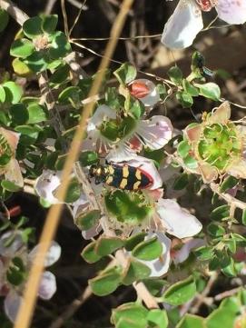 Jewel beetle by Annette Short