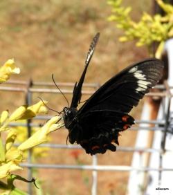 Butterfly by Alwyn Campbell