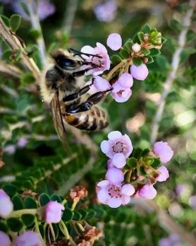 European honey bee by Lisa G