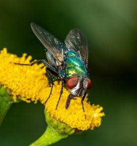 Fly by Merrilyn Smith
