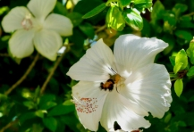 Hawk moth by Random Research