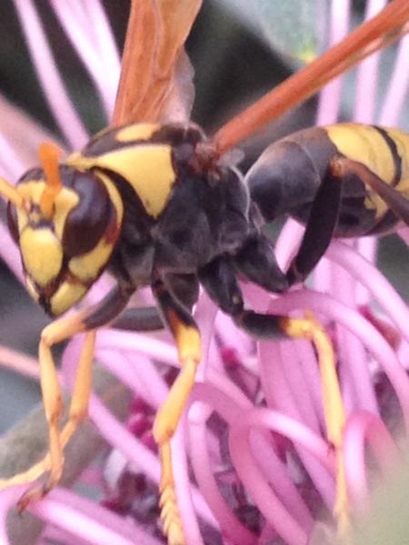 Wasp by Julie Mckinlay
