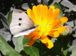 White butterfly by Silvana Benacchio-2