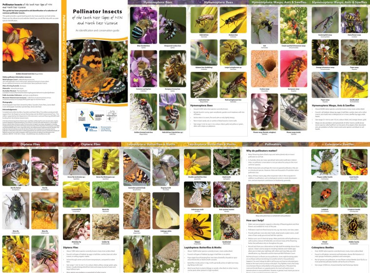Pollinators-NSW-NE-Vic-2020_online